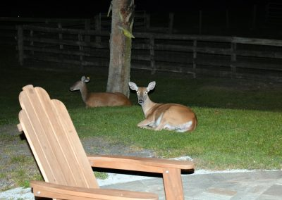 Deer at night at Triple Tree Ranch