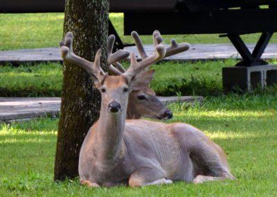 2 deer at Triple Tree Ranch